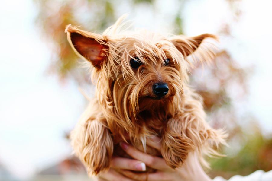 Mckinney Texas Pet & Animal Photographer