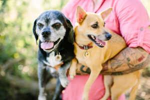 Long Beach pet photographer