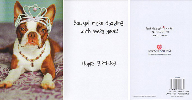 Clementine's American Greeting card {Los Angeles pet photographer}